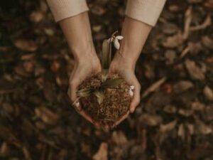manos con tierra de la que crece una plantita para representar el crecimiento postraumático